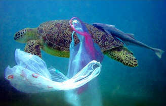 Turtles become entangled in, and mistakenly consume, plastic bags